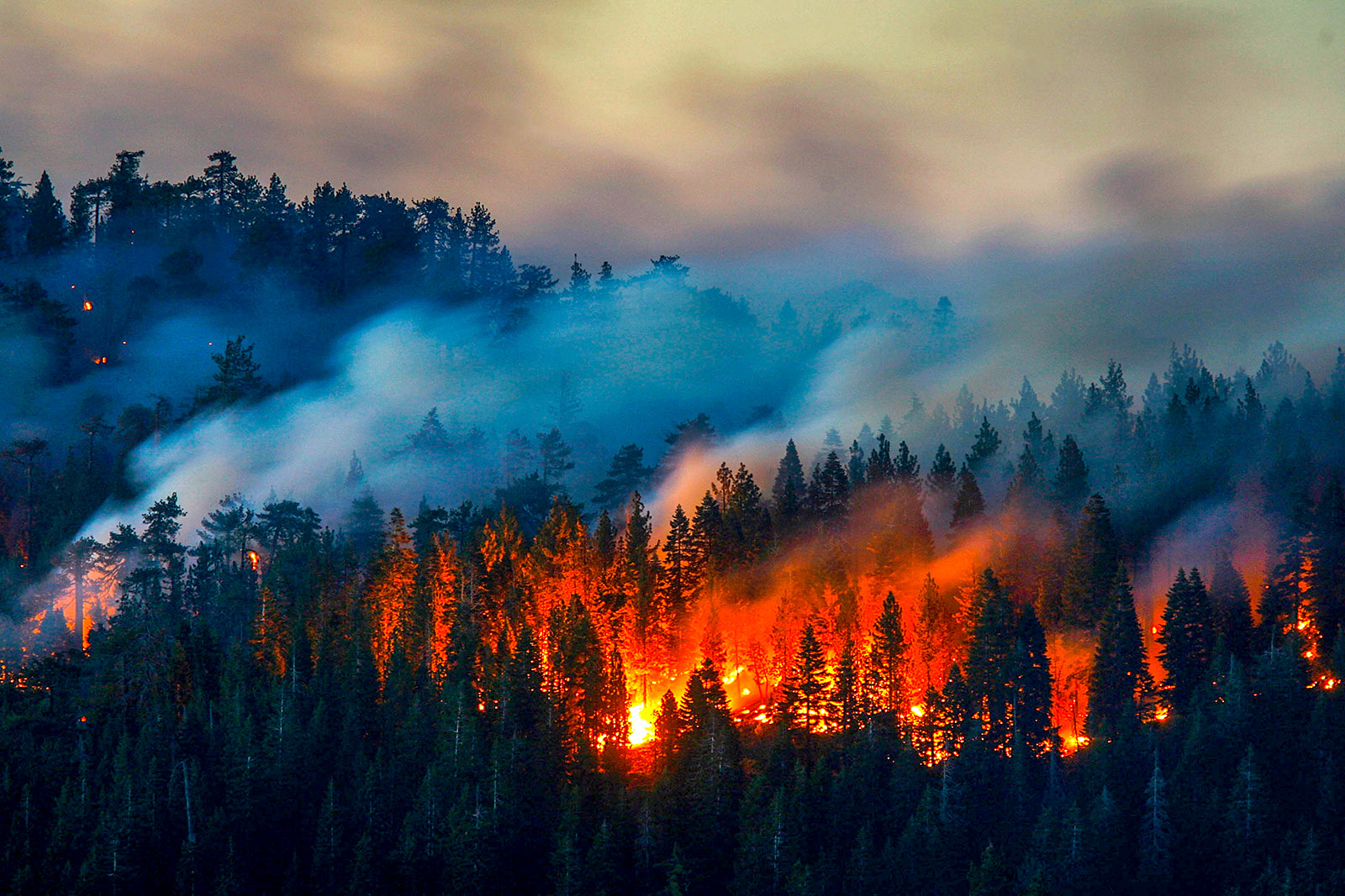 Can We Use Nature to Mitigate Wildfire Risk?
