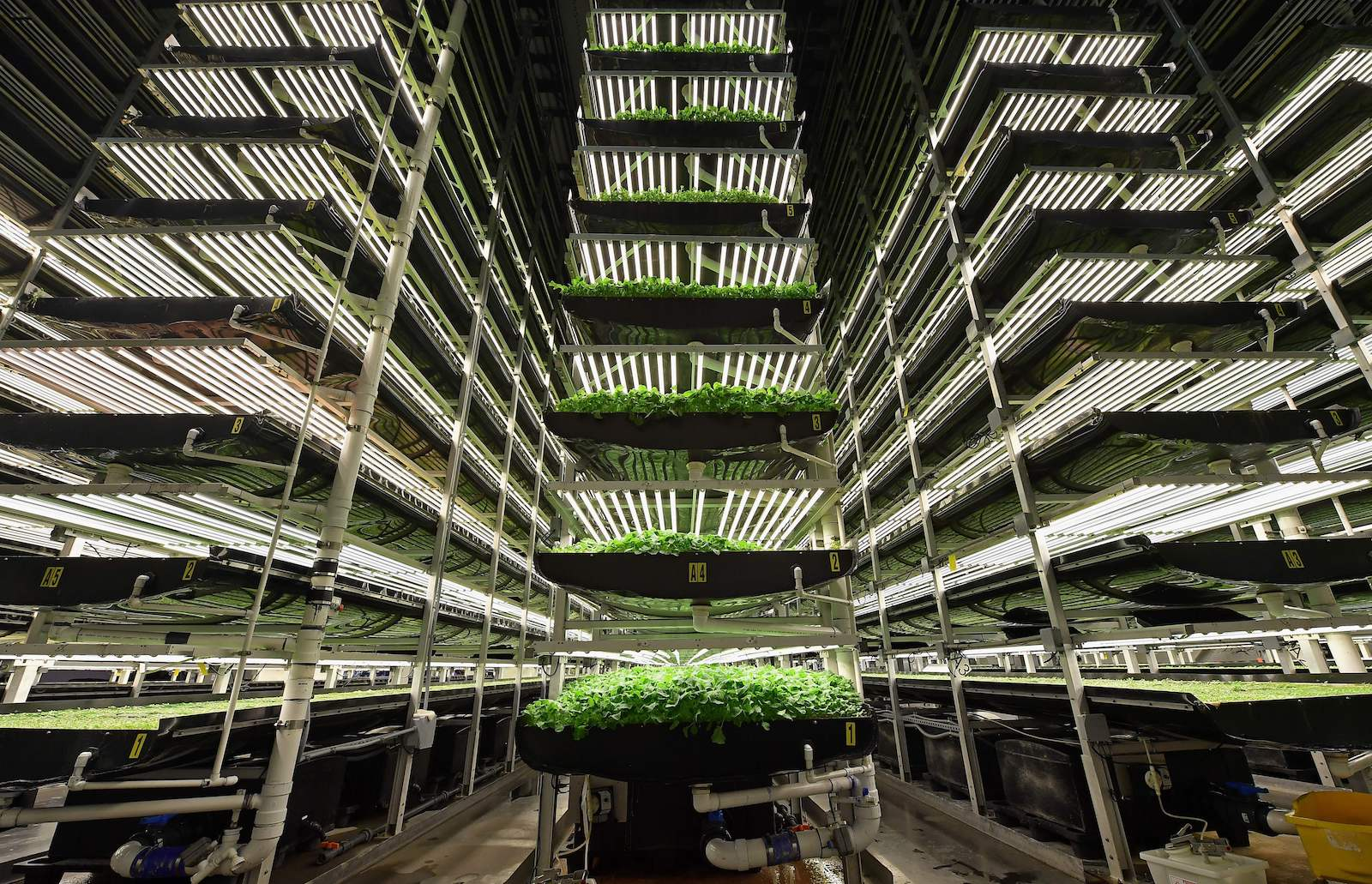 Is Indoor Agriculture The Future Of Farming Brink News And Insights On Global Risk